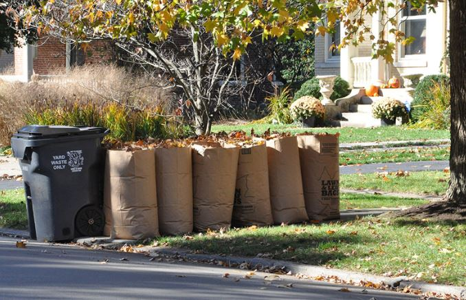 Leaves in paper bags awaiting collection
