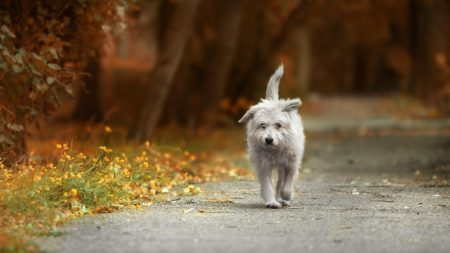 dog wandering outdoors