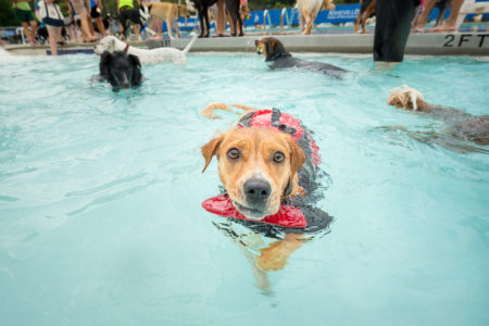 dog swimming at asheville's annual doggie dip