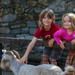 Kids petting goats at the WNC Nature Center