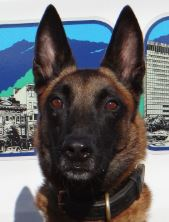 photo of Asheville Police K9 Officer Xander