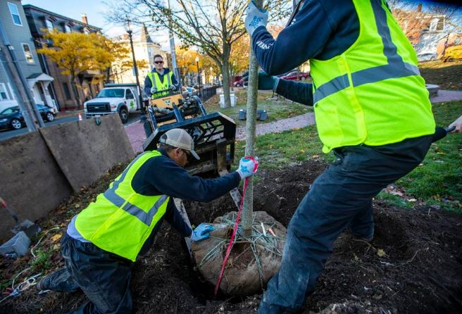 Photo of workers planting a tree