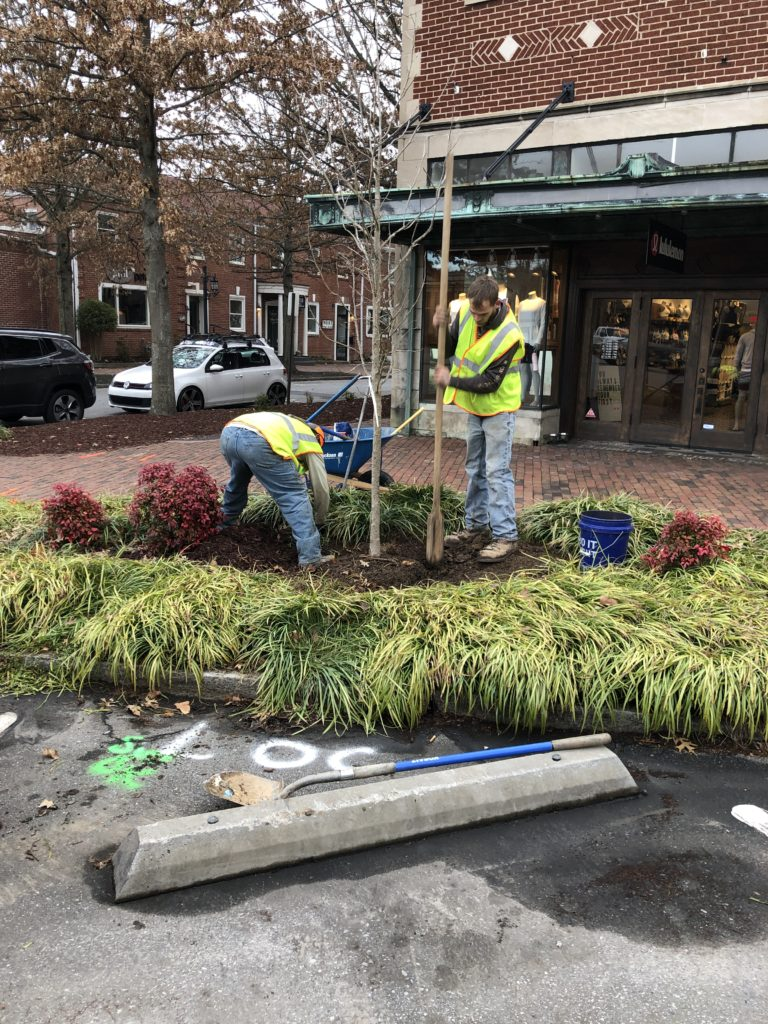 Crews plant a new tree on Kitchen Place.