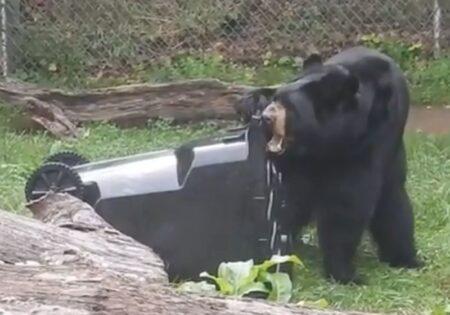 bear trash cart