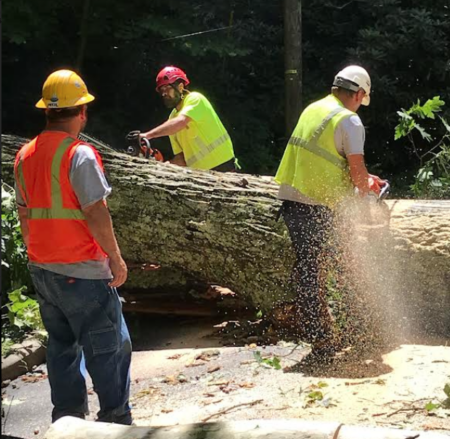 Cutting downed tree