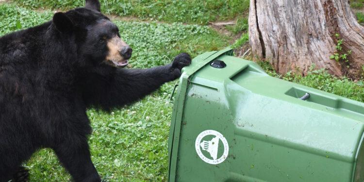Bear with trash cart